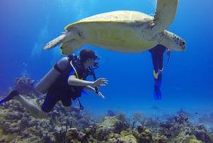 diver-549380_640